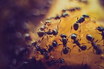 Künstliche Intelligenz Ameisen und Ethik