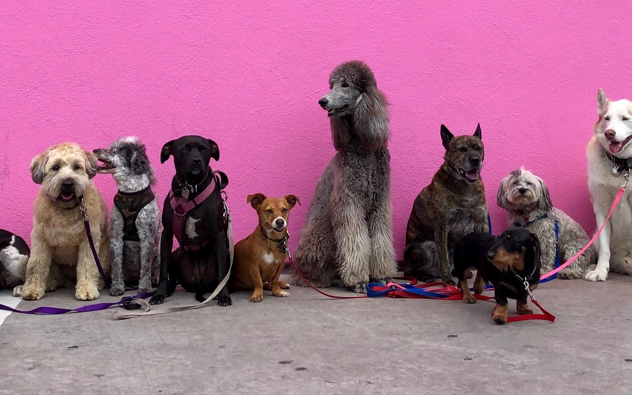 Was ist künstliche Intelligenz einfach und anschaulich erklärt mit Hunden